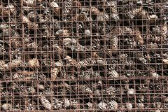 Prison and Imprisonment of Cones Behind Bars. Background of Pine. Background of Pine Cones. Cones on the Grate. Prison and Imprisonment of Cones Behind Bars Stock Image