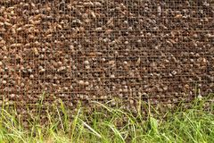 Prison and Imprisonment of Cones Behind Bars. Background of Pine. Background of Pine Cones and Grains of Grass. Cones on the Grate. Prison and Imprisonment of Royalty Free Stock Photos