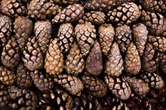 Background of pine cones. Background of opened pine cones close up Stock Images
