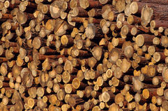 Background from pine logs Royalty Free Stock Images