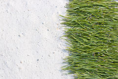Background of pine needles on the sand Royalty Free Stock Photos