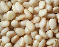 Background of pine nuts Stock Images