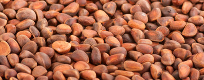 Background of pine nuts. Royalty Free Stock Image
