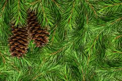 Background with pine tree branches and cones. Green natural background with pine tree branchesand cones. Flat lay. Top view Royalty Free Stock Images