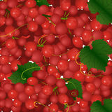 Background of pink bunches of grapes Stock Photos