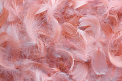 Background of pink feathers. Texture of bright pigeon feathers stock image
