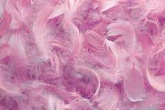 Background of pink feathers. Texture of bright pigeon feathers royalty free stock photos