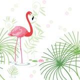 Background, pink flamingo Royalty Free Stock Photo