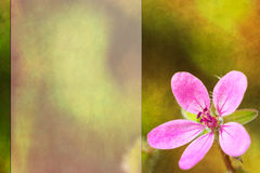 Background with pink flower Royalty Free Stock Images
