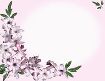 Background pink flowers. A background of pink flowers and foliage for your message Stock Photo
