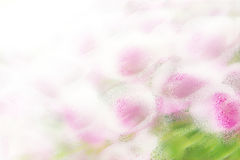 Background - pink flowers royalty free stock images