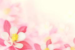 Background - pink flowers stock photography