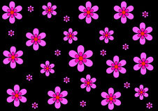 Background of pink flowers on black Stock Photos