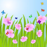 Background with pink flowers and butterflies Stock Images