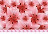 Background of pink lilies Stock Photo