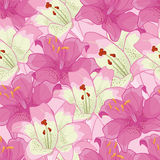 Background with pink lilies.floral background Stock Photography