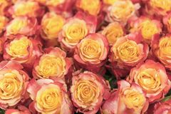 Background of pink and peach roses. Fresh pink roses. A huge bouquet of flowers. The best gift for women. Background.  royalty free stock photos