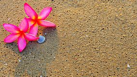 Background of pink Plumeria flowers on beach sand. Concept of holiday or relaxing time Royalty Free Stock Images