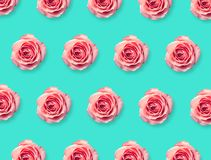 Background of pink rose bloom. Colorful floral background of pink rose bloom. Top view Royalty Free Stock Images