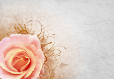 Background with  pink rose Royalty Free Stock Photos