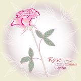 Background with pink rose Stock Photos