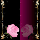 Background with pink roses Stock Images