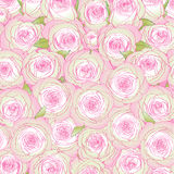 Background from pink roses Stock Photo