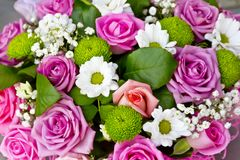 Background of pink roses and white chrysanthemums Royalty Free Stock Photography
