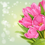 Background of pink tulips Stock Photos