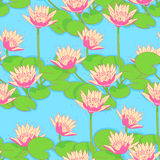 Background with pink water lilies Royalty Free Stock Photos