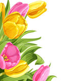 Background of pink and yellow tulips Stock Photos