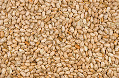 Background with pinto beans Royalty Free Stock Photography