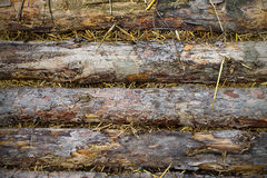 Background planks of pine. Background horizontal planks of pine and straw Royalty Free Stock Image