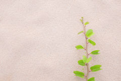 Background of plant  on the beach Royalty Free Stock Photo