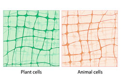 Background plant cells and animal cells Stock Images