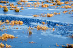 Background of plants in frozen lake. Duirng winter Royalty Free Stock Images