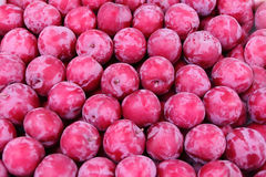 Background plum Royalty Free Stock Images