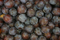 Background of plums. Background full of ripe plums Stock Photos