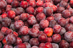 Background of plums. Abstract background of freshly harvested Santa Rosa plums Stock Images