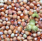Background of the plurality of hazelnut Stock Image