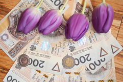 Background from 200 polish  zloty. Background from 200 polish zloty and coins with tulips Royalty Free Stock Images