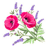 Background with poppies. Stock Photography