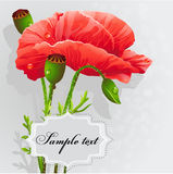Background with poppies-EPS10. Background with poppies for your text Stock Photos