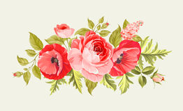 Background with poppies. Royalty Free Stock Images