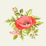 Background with poppies. Royalty Free Stock Photography