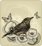 Background with poppy flowers and bird fieldfare,. Hand-drawing. Vector illustration Royalty Free Stock Photos