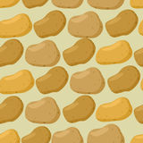 Background of  potato. Vector seamless  pattern of vegetables. Royalty Free Stock Images
