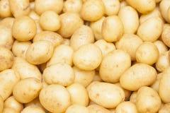 Background potatoes Stock Image