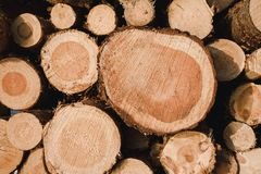 Background of pulpwood texture. Close-up stock photo