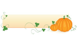 Background with pumpkins Royalty Free Stock Photography